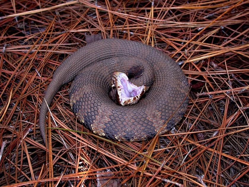 snake-1332381_960_720
