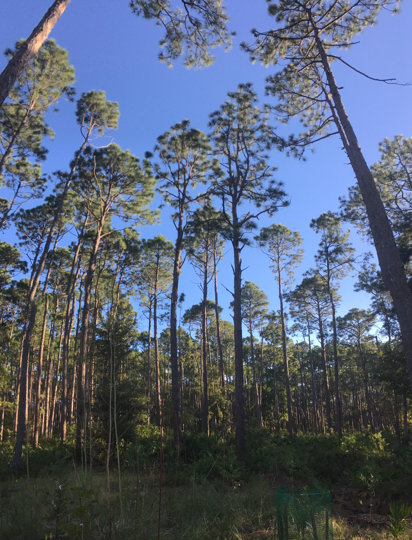 woods_trees