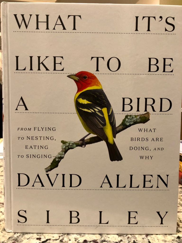 book cover of what it's like to be a bird